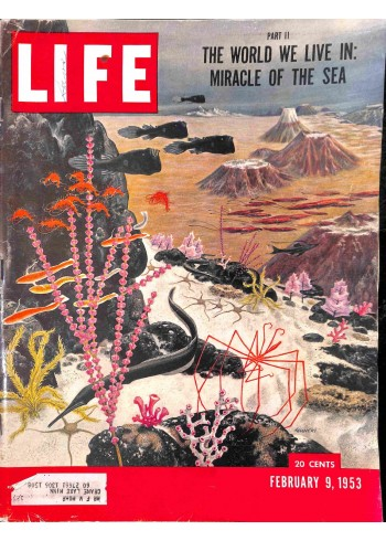 Cover Print of Life, February 9 1953