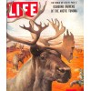 Cover Print of Life, June 7 1954