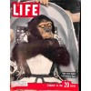 Cover Print of Life, February 10 1961