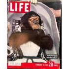Cover Print of Life Magazine, February 10 1961