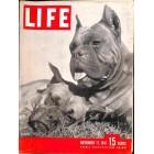 Cover Print of Life, November 17 1947
