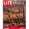 Cover Print of Life, November 8 1954