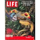 Life, September 20 1954