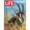 Life, December 5 1969