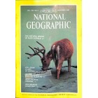 Cover Print of National Geographic, November 1981