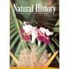 Cover Print of Natural History, April 1955
