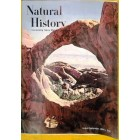 Natural History, August 1964