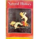 Natural History, December 1964