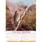 Natural History, February 1951