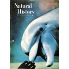 Natural History, February 1962