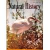 Natural History, January 1958