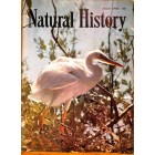 Cover Print of Natural History, January 1958