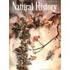 Cover Print of Natural History, November 1985