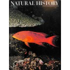 Natural History , August 1971