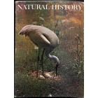 Cover Print of Natural History , February 1974