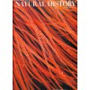 Cover Print of Natural History , March 1971