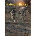 Natural History , May 1968