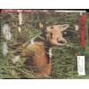 Cover Print of Trapper and Predator Caller, June 1988